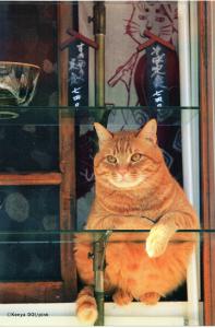 町屋の蕎麦屋さんの看板猫